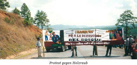 Proteste gegen Holzraub